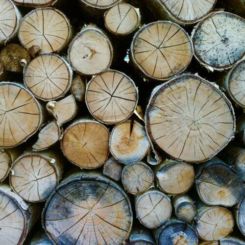 Czym jest kaloryczność drewna i jakie drewno na opał wybrać?